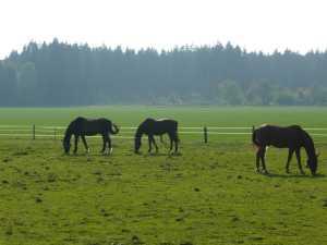 Pferde und Wald