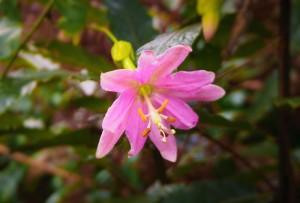 Blume am Wegrand